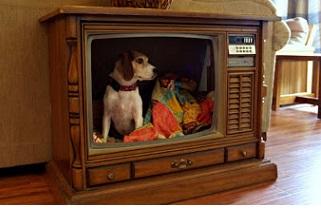Television Removal Santa Rosa Tv Recycling 707 922 5654